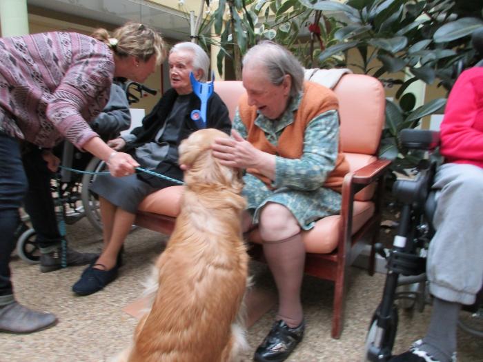Goldie, le chien visiteur